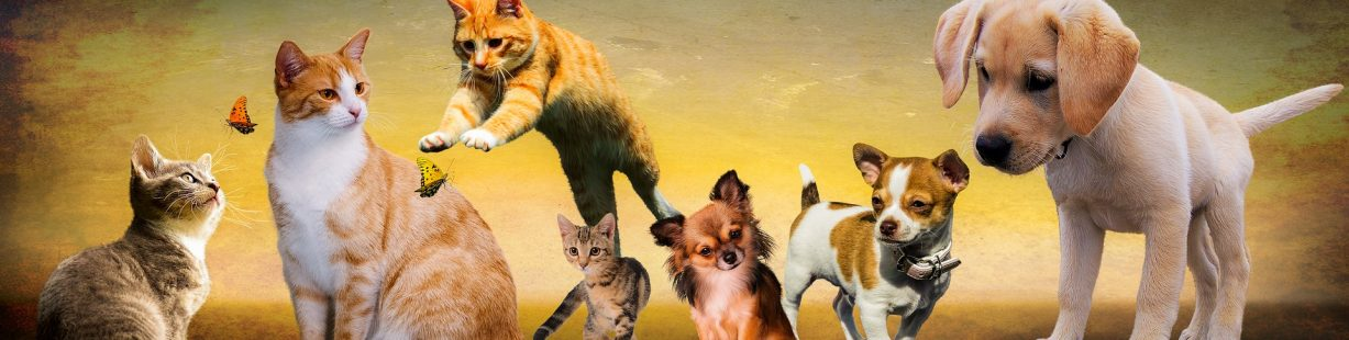 Image of dogs and cats and butterflies