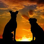 Image of two dogs watching sunset